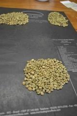 Grading wBrazylii -W siedzibie brazylijskiej firmy Monte Alegre kawa poddawana jest gradingowi. Grading jest procedurą klasyfikowania kawy wcelu ustalenia jej typu, aco zatym idzie ceny, orazstwierdzenia, czynadaje się naeksport, czytez należy sprzedać ją narynku zenętrznym. Polega naoddzieleniu iposortowaniu ziaren zdefektami odtych pozbawionych wad. WBrazylii powszechnie stosownae są specjalne czarne maty dogradingu, które ułatwiają rozpoznawanie defektów.