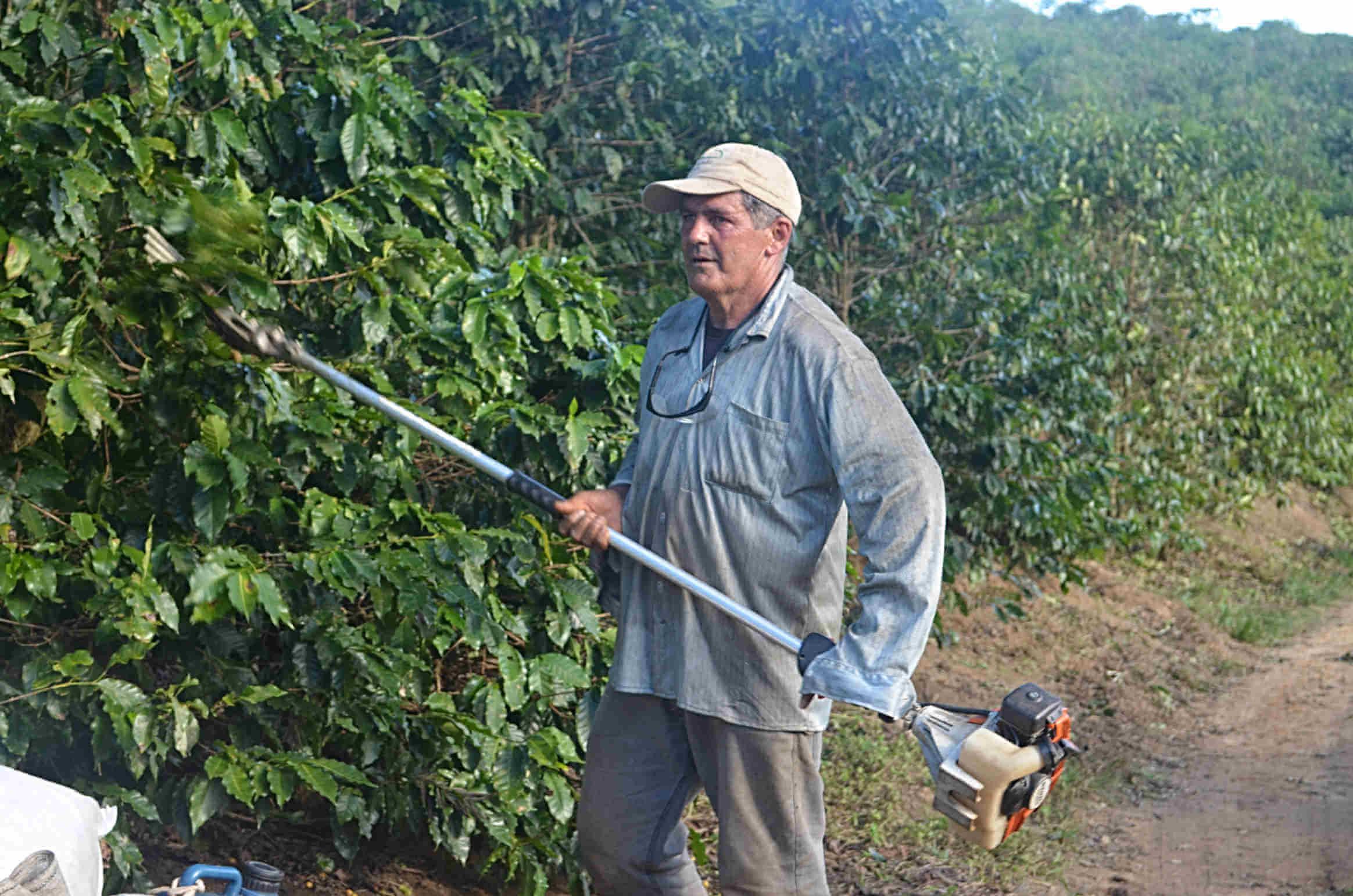 Zbiory kawy wBrazylii – Rzadko spotykane wBrazylii zbiory nawpół zmechanizowane, wykonywane przy użyciu specjalnych urządzeń.
