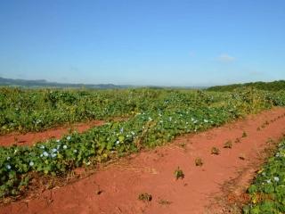 Rośliny, których zadaniem jest częściowe zatrzymanie wody wglebie